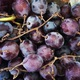 Kyoho grapes from Ken's Top Notch Produce