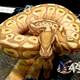 Marc Bailey Reptiles - United States Association of Reptile Keepers