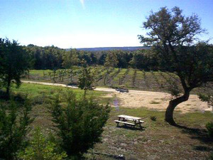 Bluff Dale Vineyards in the Hill Country