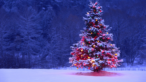 Tumblr static free wallpaper christmas tree