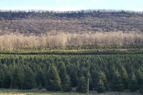 Photo courtesy of Tait Farm Christmas Trees.
