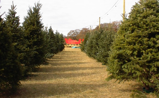 Flower Mound Christmas Trees - Flower Mound, TX - Find Your 2014 Christmas Tree At One Of These 5 Mansfield-Area Spots