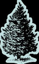 Medium tree thumb 212x124 thumb