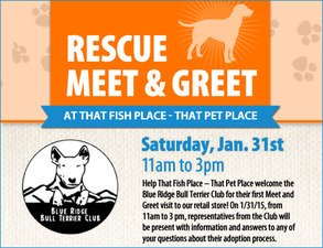 Blue Ridge Bull Terrier Meet and Greet - start Jan 31 2015 1100AM