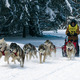 Pennsylvania Sled Dog Club Provides Outlet for Urban Mushers  - Dec 30 2014 1209PM