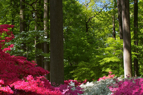Courtesy of Winterthur Originally a 2,500-acre working farm, it was the idea of Henry Francis du Pont to create a majestic series of gardens for the public to enjoy.