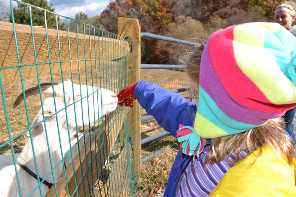 Photos by Richard L. Gaw	Classes give children the opportunity to learn about farm animals, first-hand.