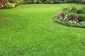 Medium lawn 5551