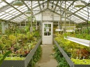 Medium greenhouse