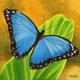 Butterfly - Artwork photo courtesy of Tauni Fessler