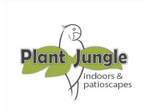 Plant 20jungle 20logo