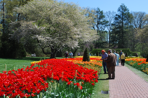 Guests flock to Longwood's spectacular displays.