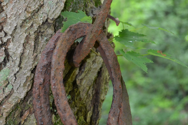 These horseshoes along the half-mile-long trail are just a few of the many trinkets left there by the Hendrickson family.