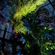 Longwood Gardens is lighting up the night with sound and light installations through Oct 31