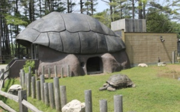 Aldabra Tortise in the Land of the Giants Exhibit