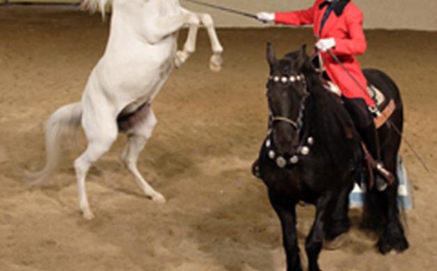 w-dancing-horse_1405