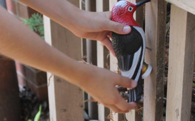 Woodpecker Cache