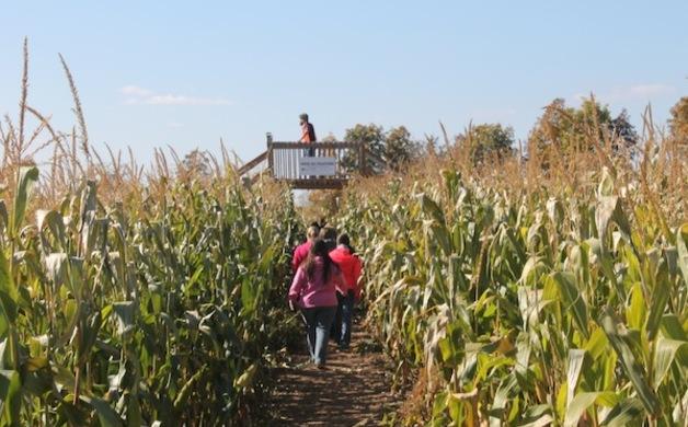 Mauer Farms Corn Maze