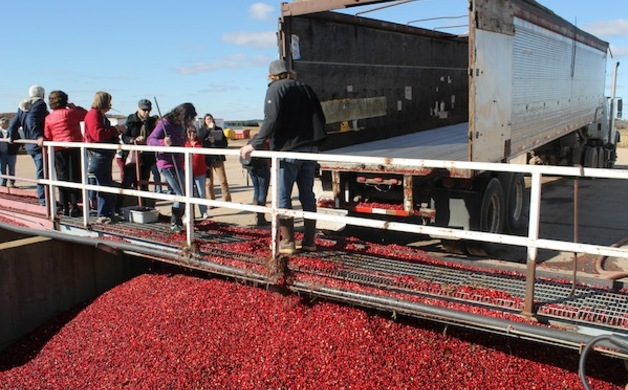 Also in Pittsville the Sweet and Dry ision of Badger State Fruit Processing Inc. is a premier supplier of dried cranberries. Interesting fact in order ... & Wisconsin Cranberry Harvest | Wisconsin Parent