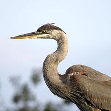 Medium birding