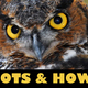 10th Annual Hoots  Howls at VINS  - start
