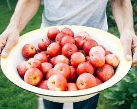 Medium apples