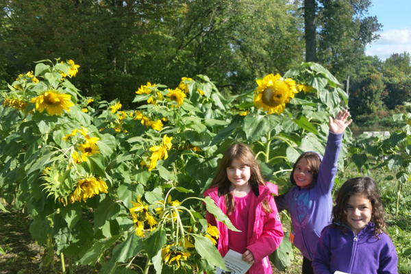 Lilah Staeben, Alida Ortiz Proctor, Sophia Andrade and enjoyed Tewksbury Congregational Church's free family field trip to Heifer Farm in Rutland MA.