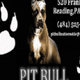 Main image pitbullbizcardcompleteside122223