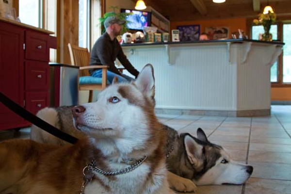 Siberian Huskies Kato and Echo wait calmly with their owner Logan Scelza in reception at Norwich Regional Animal Hospital.