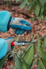 Medium pruning 20small