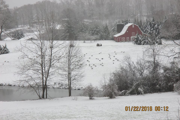 The Red Barn Cafe and wild turkeys - photo by Lucy Bartlett