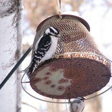 Medium feedthebirds