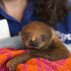 Baby Sloth Makes Debut for National Aviary Visitors - Feb 26 2016 0537PM