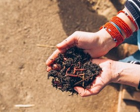 Medium soil 20compost