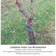 Thumb viticulture june 209