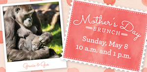 Mothers Day Brunch  the Fort Worth Zoo - start May 08 2016 1000AM