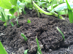Medium dirt