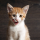 Why Kitten Season is Much More Serious than It Sounds - May 31 2016 0150PM