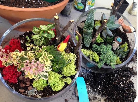 Build Your Own Terrarium/Fairy Garden Class