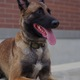 One of Draper City Police Department's newest officers, K9 judge. Photo Linnea Lundgren