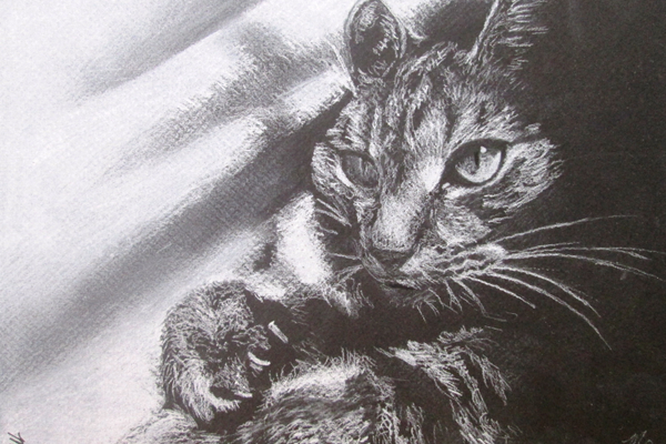 This drawing of Morgan's cat was done 'just for fun' recently.