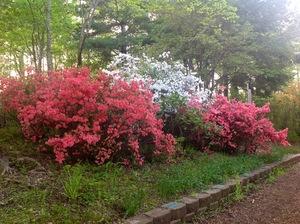 Hamilton Gardens - Hiawassee GA