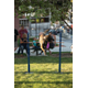 K-9 Joker goes over the bar jump. —Sarah Knight Photography