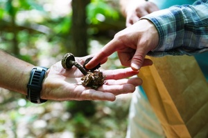 Medium mushroomwalk1