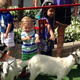 Petting zoo at Camp Arbor at the Shoppes at Arbor Lakes on July 19, 2016