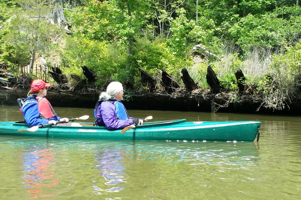 Kayaking past 'ghost ships' in Mallows Bay Park