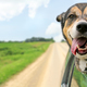 Beat the Heat Keep Your Pet Safe and Healthy - Jul 31 2016 1105PM