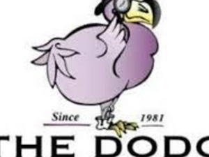 Main image the 20dodo