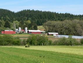 Medium 1 farm