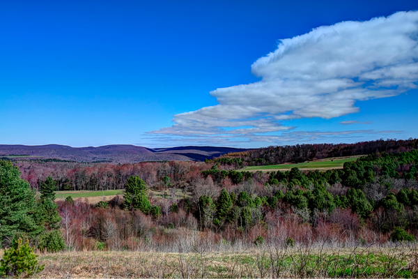 Dents Run Viewing Area.  Photo by Nicholas A. Tonelli.